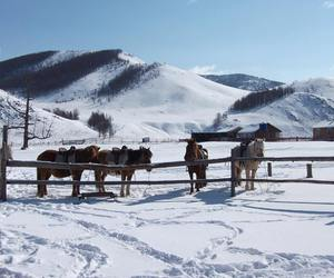 horse, mongolia, and snow image