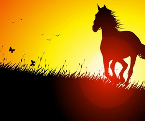 horse, sunset, and butterflies image