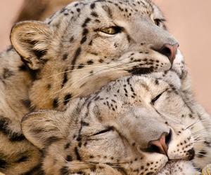 animal, cute, and love image