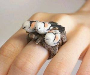 bird, ring, and cute image