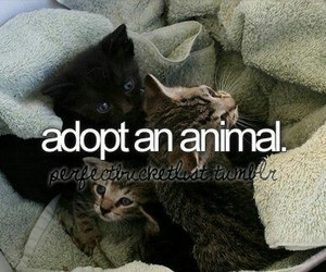 adopt, cat, and list image