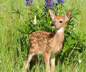 animals, fawn, and nature image