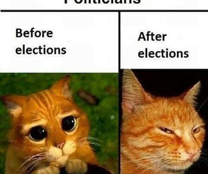 cat, funny, and election image