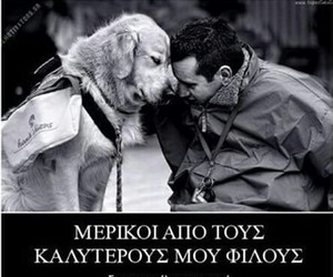 greek, dog, and quotes image