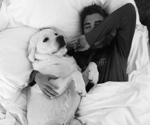 dog, cute, and boy image