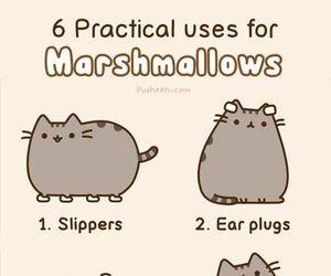 cat, pusheen, and marshmallow image