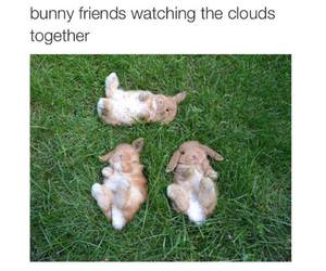 animals, baby, and bunnies image