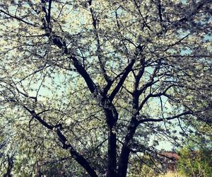 flower, Hot, and lightblue image