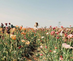 field, flowers, and free image