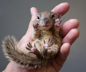 squirrel, animal, and hand image