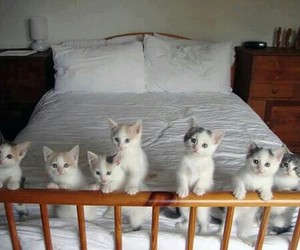 bed, chaton, and kitten image