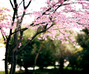 bloom, pink, and spring image