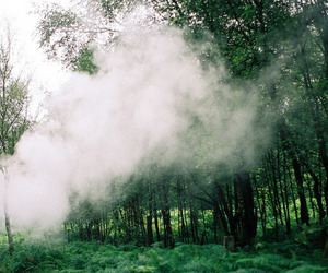 forest, tree, and smoke image