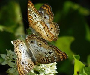 butterflies and flower image
