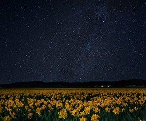 beneath, bright, and daffodils image