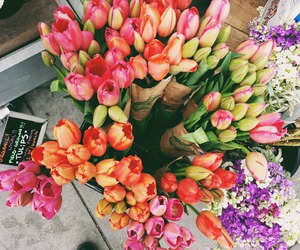classy, flower, and tulips image