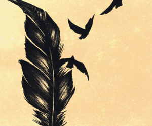 bird, feather, and fly image