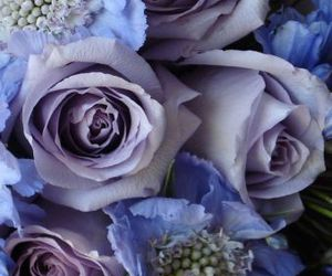 flowers, pretty, and purple roses image