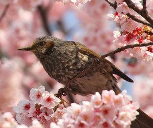 beautiful, bird, and boho image