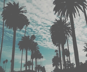 summer, palms, and sky image