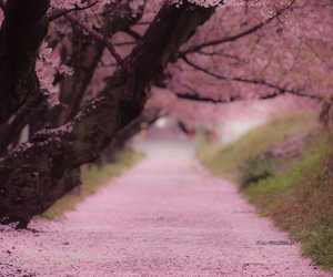 spring and pink image