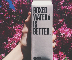 water, flowers, and better image