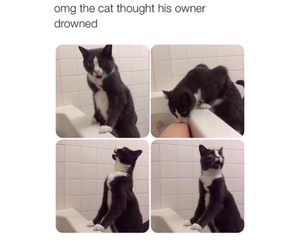 cat, funny, and person image
