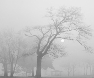 tree, pale, and black and white image