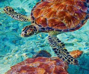 nadando, tortugas, and linduras image