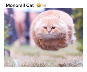 cat, funny, and monorail image