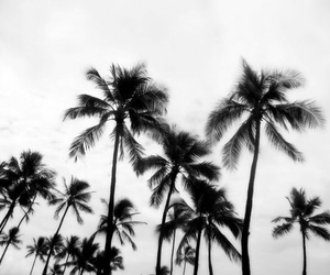 palms, summer, and black and white image
