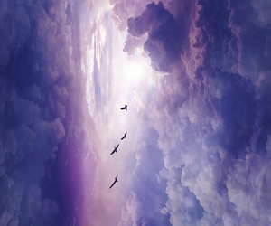 clouds, sky, and bird image