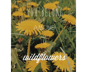 flowers, outdoors, and wildflowers image