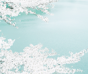 flowers, white, and sakura image