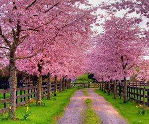 pink, spring, and flowers image