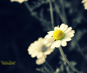 flower, yellow, and sun image
