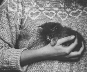 animal, kitten, and black and white image