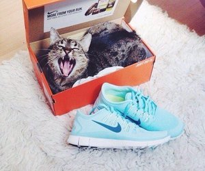 nike, cat, and shoes image
