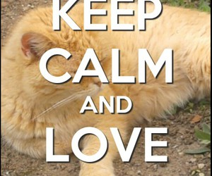 cat, keep calm, and sweet image