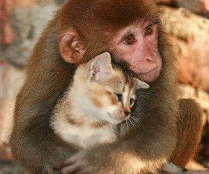 adorable, animals, and kitten image