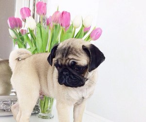 flowers, pink, and pug image