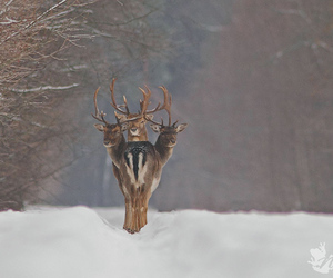 animals, beautiful, and deers image