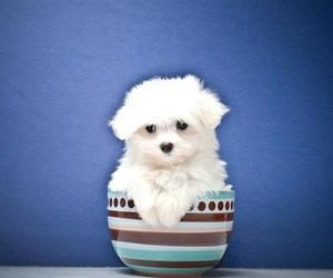 baby animals, cute animals, and dogs image