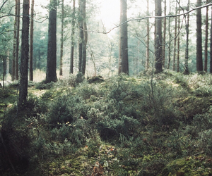 forest, hipster, and vintage image