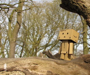 alone, danbo, and forest image