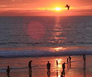 beach, sunset, and bird image