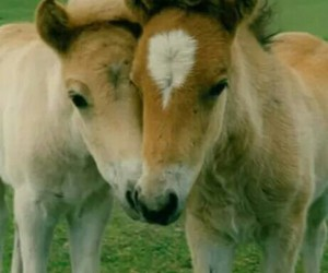 baby animals, horses, and together image