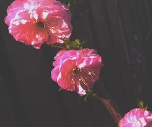 flowers, pink, and selfmade image