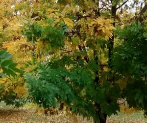 autumn, beautiful, and peace image