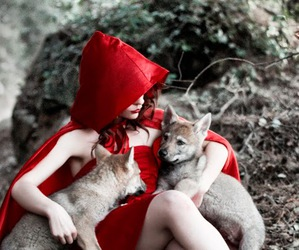 wolf and forest image